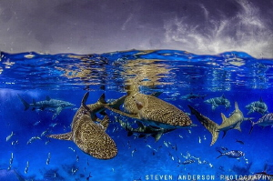 Lots of traffic at the surface after an exciting dive at ... by Steven Anderson