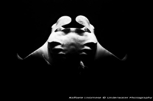 Manta ray in night dive, with matural light from the boat... by Raffaele Livornese