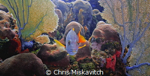 Fish in color.... by Chris Miskavitch