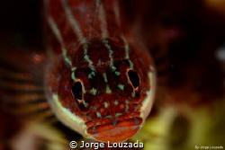 Red Gobi by Jorge Louzada