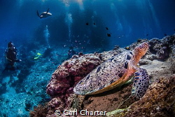 This image was taken on a dive at Sipadan marine reserve.... by Carl Charter