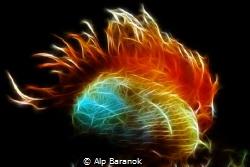 Flammable! by Alp Baranok