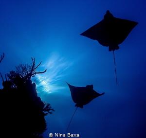 Gliders by Nina Baxa