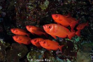 Big eyes in formation by Leena Roy
