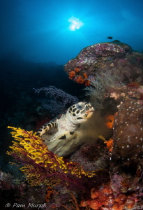 Dinner Time...at Nudi Rock by Pam Murph