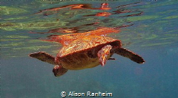 Turtle Power! by Alison Ranheim