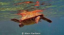 Turtle Power! by Alison Ranheim