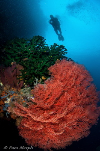 In A Sea of Red.     Raja Ampat, Indonesia by Pam Murph