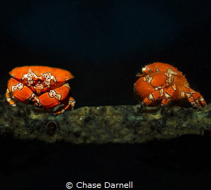 """""""We've got Company""""  Composite of two different Gaudy Cl... by Chase Darnell"""