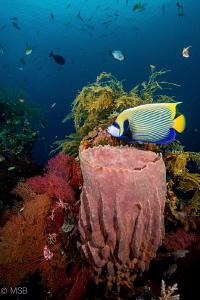 Colors from Liberty Wreck. by Mehmet Salih Bilal