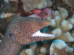 Whitemouth Moray auto setting by Randy Fronda