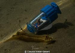 Teddi's submarine adventures - encounter with a nudi by Claudia Weber-Gebert