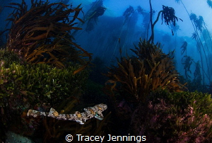 A shy shark ... by Tracey Jennings