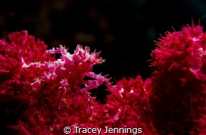Christmas candy .. by Tracey Jennings