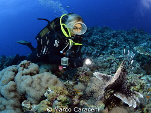 Aurora and the lionfish by Marco Caraceni
