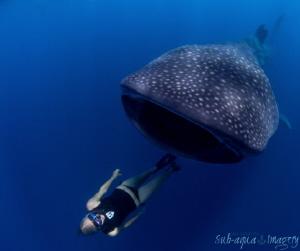 Free Diver with Whale Shark - Diver Liz Parkinson interac... by Jan Morton