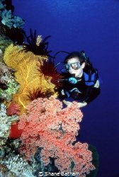 Diver Gorgonian Fan and Soft Coral by Shane Batham