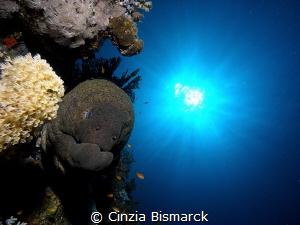 Giant morey @Ras Katy- Sharm El Sheikh- Egypt Gymnothora... by Cinzia Bismarck