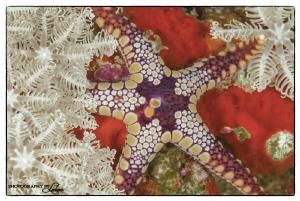 Merry Xmas underwater style! 1/125 sec;   f/18;   ISO 20... by Ledean Paden