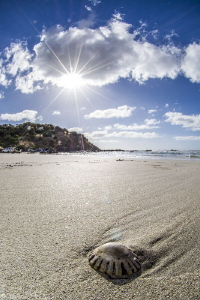 life is a ... [beach] !....(king Georges' beach, Kangaroo... by Mathieu Foulquié