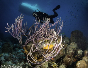 Right on the drop off to the lower reef, I found this rop... by Patricia Sinclair
