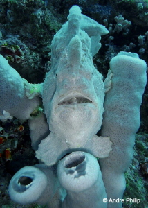"""""""Go away, this is my home!"""" - a Giant Frogfish in his sponge by Andre Philip"""
