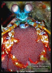 mantis by Oscar Miralpeix