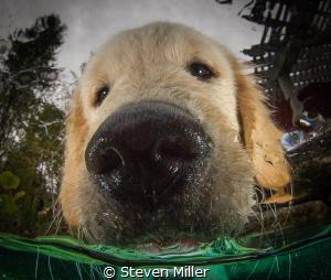 wet puppy kisses, our alarm clock by Steven Miller