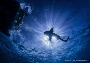 Nurse Shark was curious about our dive boat! by Ken Kiefer