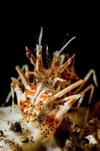 Tiger shrimp. My first and last encounter. by Mehmet Salih Bilal