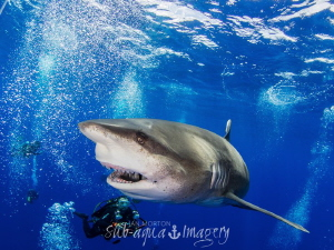 CHEESE!!!  Oceanic White Tip Female with Diver Cat Islan... by Jan Morton
