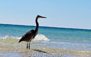Sea Bird just hanging out. by Chris Miskavitch