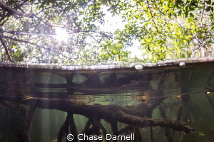 """""""Aqua Forest""""  Big roots form the foundation for the Man... by Chase Darnell"""