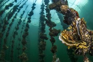 Oyster farm in Thau lagoon by Mathieu Foulquié