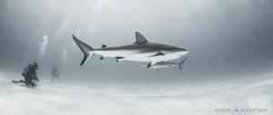 Reef Sharks by Ken Kiefer