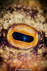 Octopus Eye by Marco Gargiulo