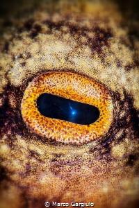 Octopus Eye by Marco Gargiulo
