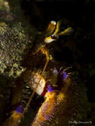 Hermit Crab by Felipe Gonzalez