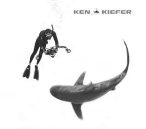 Shark and Photographer Dance by Ken Kiefer