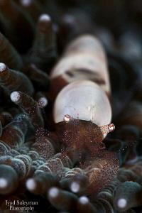 Shrimp by Iyad Suleyman