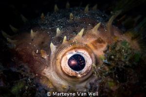 Eye contact by Marteyne Van Well