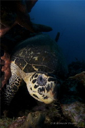 Turtle Up Close by Henrietta Honnor Passos