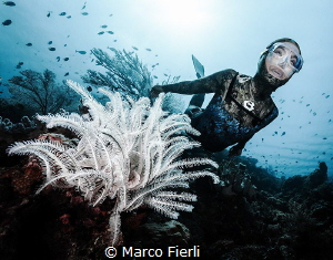 Ai and the Crinoid  Ai Futaki, Guinness World Records f... by Marco Fierli
