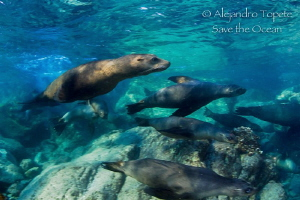 Sea Lions in the yard, La Paz Mexico by Alejandro Topete