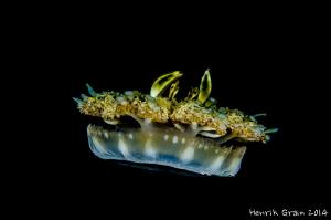 UFO (upside down Jellyfish) by Henrik Gram Rasmussen