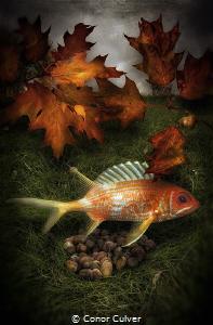 """Squirrel Preparing For Winter"" part of my Underwater Sur... by Conor Culver"