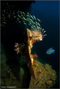 Life on the wreck by Dmitry Vinogradov