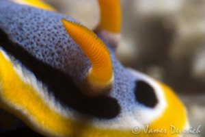 Quadricolour up close and personal by James Deverich