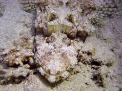 Crocodile Fish by Ryan Stafford
