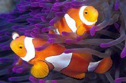 Taken in Lighthouse Bommie-great barrier reef, Australia-... by Raul Rodriguez